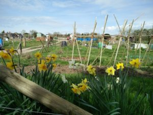 Hempcroft allotments Annual General Meeting