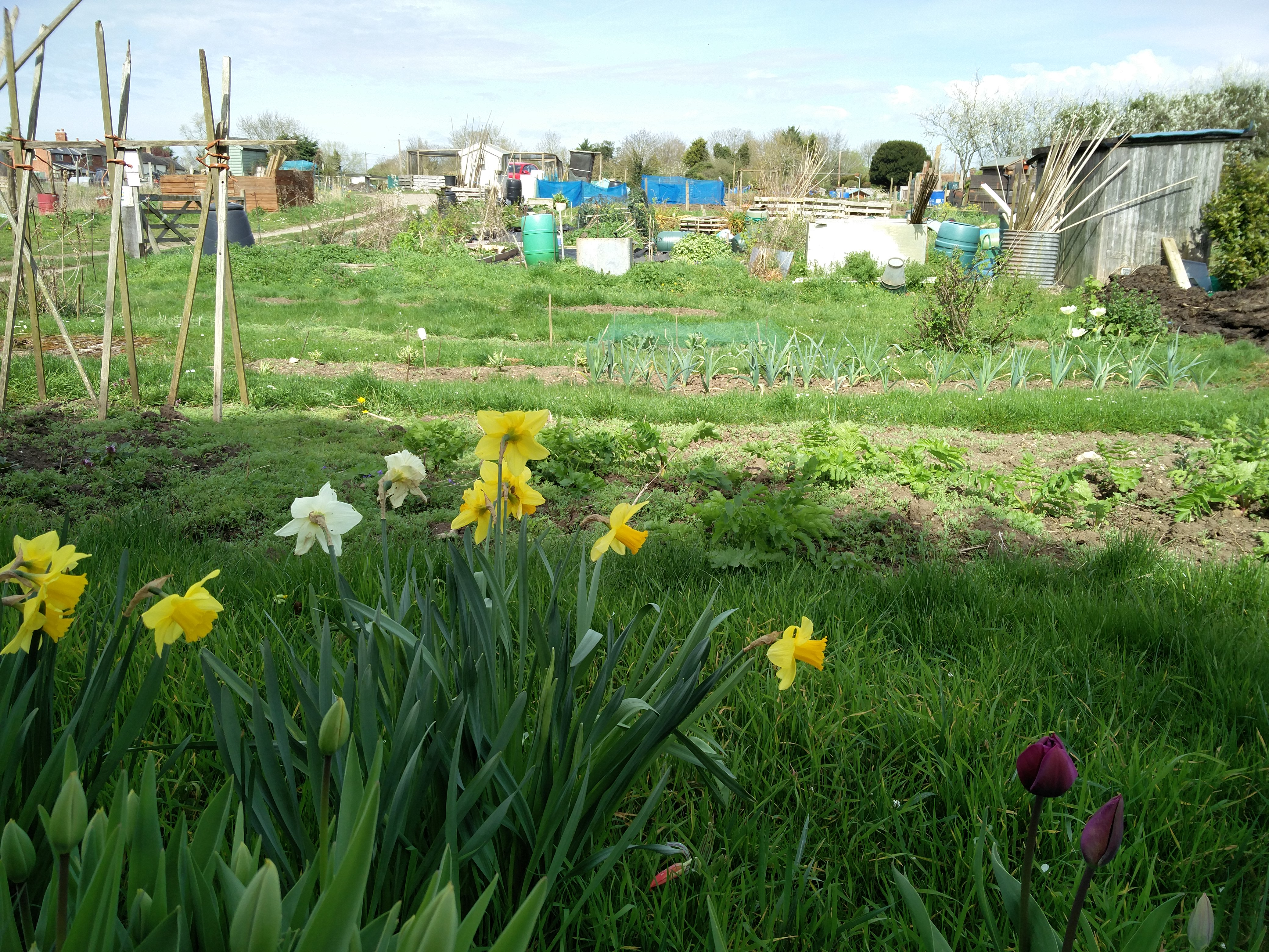 The Digging Dorchester project on the Allotments